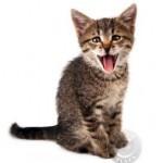 cat_ewy3_1